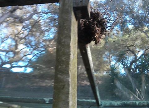 basketball of bees swarm