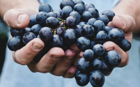 Grapes or BlueBerries?