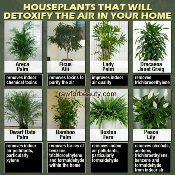 Some images of houseplants
