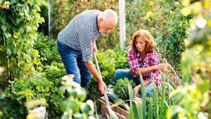Old couple gardening