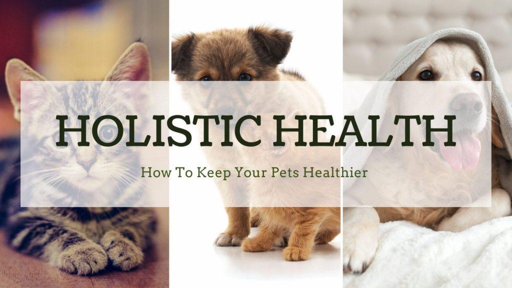 Holistic health for pets